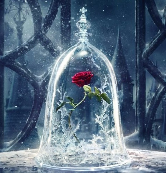 Rose from Beauty and the Beast