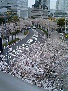2010.3.5横浜さくら.jpg